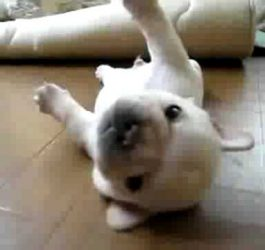 Puppy Cant Get Up