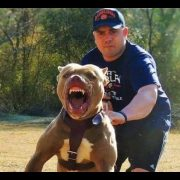 PIT BULL VS ROTTWEILER!!! PIT ATTACKS ROTT (ALMOST FIGHT)