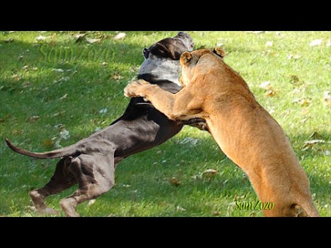 Wild animals attacks dog