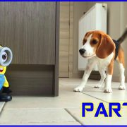 "Funny Dogs VS ""TUMBLIN STUART"" The Minion! Part 1"