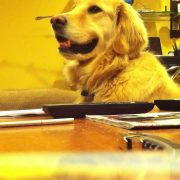 Golden Loves Guitar !!