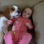 Dogs are family:Babysitting dog never had to be taught how to love baby