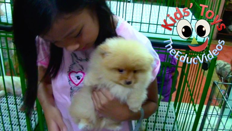 Kids' Toys Went Pet Shopping - Pomeranian and Chow Chow Puppies