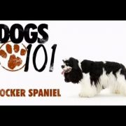 DOGS 101 - Cocker Spaniel [ENG]