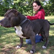 Hulk's Son Kobe Is The Pit Bull Of The Future: DOG DYNASTY