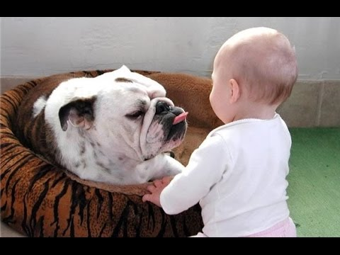 Funny Bulldog and Baby Video Compilation (2014)