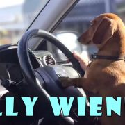 Silly wiener dogs COMPILATION - cute and funny dachshund videos
