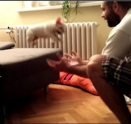 ROCKY the French Bulldog puppy jumping