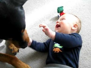Rottweiler causing a baby laugh attack