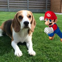 Funny Dog VS Mario And His RC Kart!
