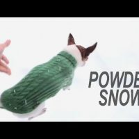 Why chihuahuas don't run on the snow?