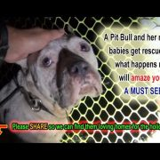 A Pit Bull and her newborn pups get rescued, but what happens next will amaze you!!! Please share