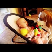 Funny Guilty Dog Video : Charlie The Beagle Apologizes Baby for Stealing Her Toy