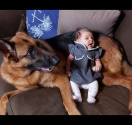 German Shepherd Dogs Playing And Protecting Babies Compilation